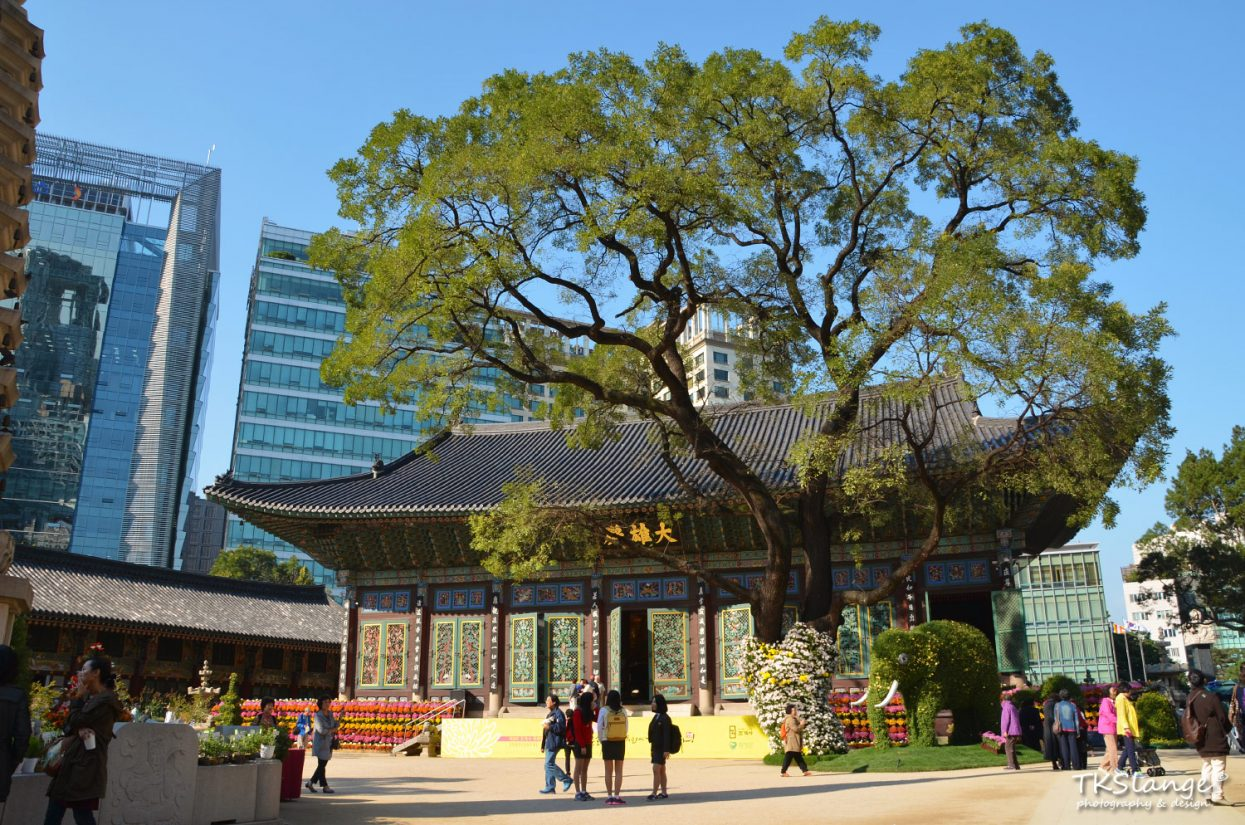 Daeungjeon, the beautiful Buddhist shrine and the giant locust tree towering above it.