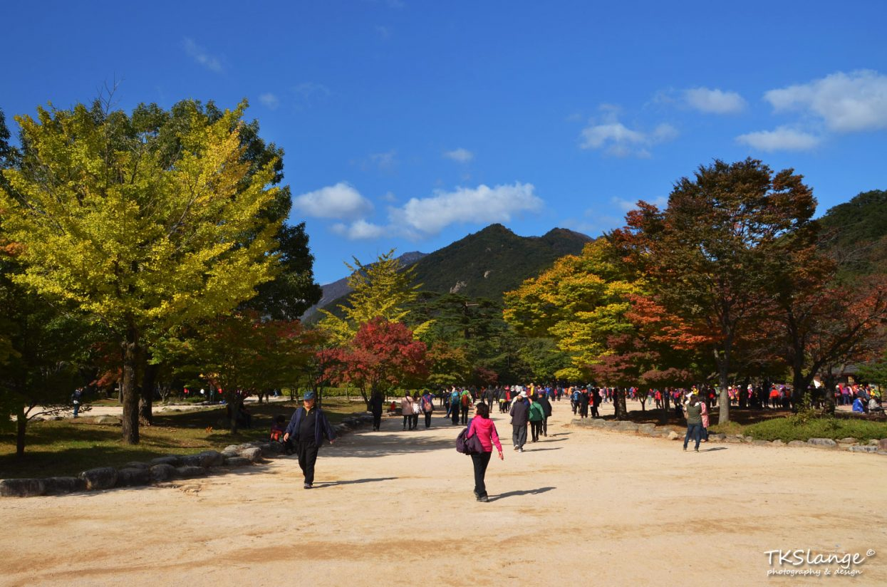 Autumn colors at the park entrance.