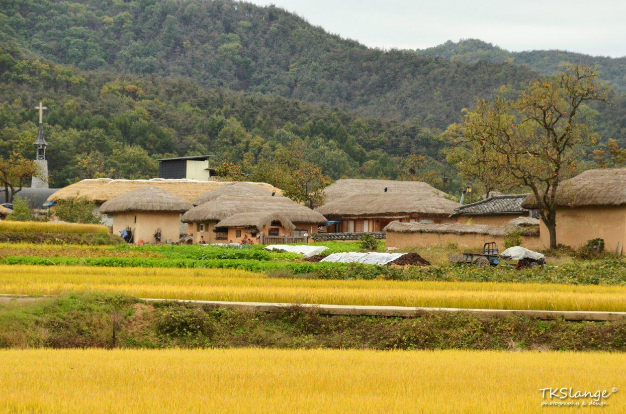 Rice fields around Hahoe Folk Village.