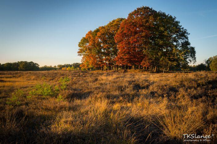 Autumn at Buurserzand